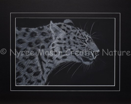 """""""Sleek"""" the Leopard: Pastel on A3 Paper. Donated to the NZA. (SOLD). Cards available."""