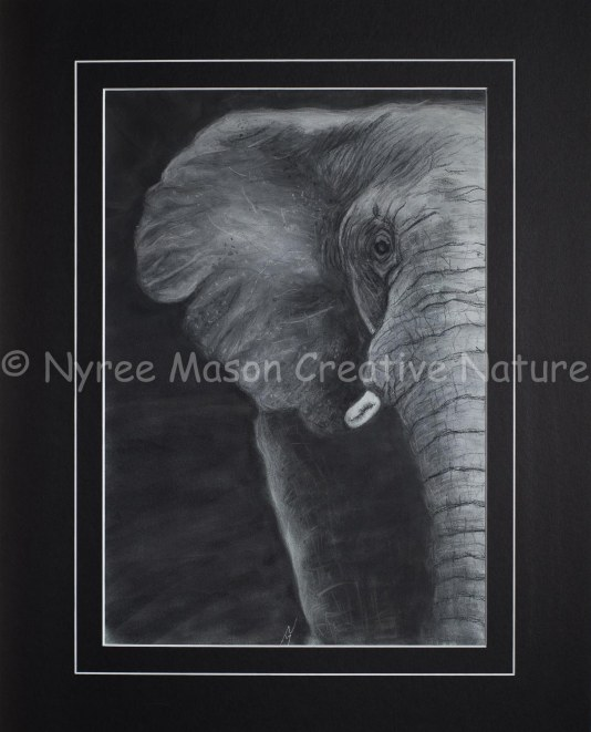 """""""Noble"""" the Elephant: Pastel on A3 Paper. Donated to the NZA. (SOLD). Cards available."""