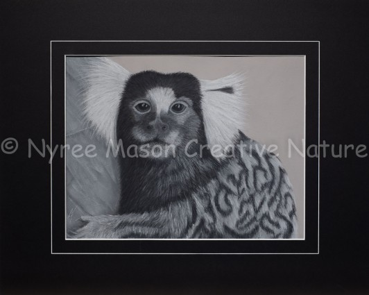 """""""Diego"""" the Common Marmoset:Pastel on A3 Paper, Framed; 54x43cm. ($200)."""