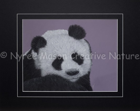 """""""Softy""""the Panda:Pastel on A3 Paper. DONATED to the National Zoo and Aquarium (NZA). Cards available."""