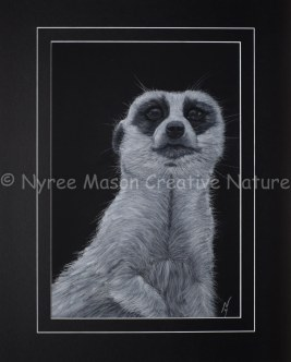 """Mr. Charming"" the Meerkat: Pastel on A3 paper. 1st Prize, Pastels, Queanbeyan City Council Exhibition, QAS, 2015. (Not For Sale). Cards and posters available."