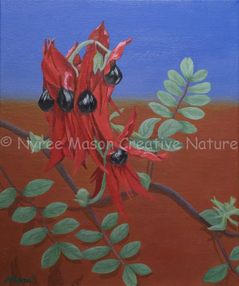 Sturt's Desert Pea: Acrylic on wrapped thin-edge canvas; 25.5cm x 30cm. (SOLD).