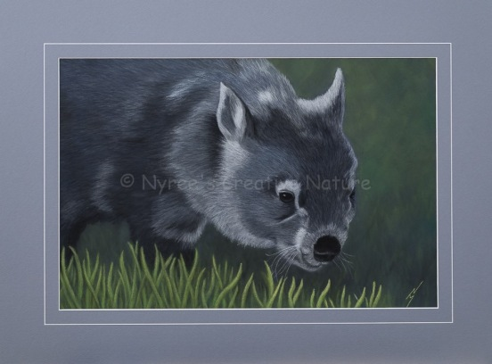 """""""Sooty"""" the Wombat: Pastel on A2 paper; Framed; 71.5cm x 54.5cm ($350). Cards and limited edition Giclée Prints available."""