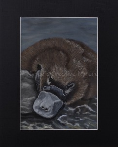 """Ambrose"" the Platypus:Pastel on A3 paper; Framed; 43.5cm x 53.5cm ($490).2nd Prize, Pastels, Queanbeyan-Palerang Regional Council Exhibition, QAS, 2016.Cards & limited edition Giclée Prints available."