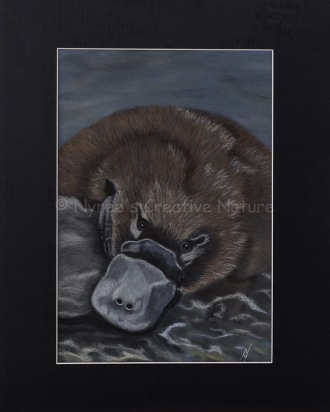 """Ambrose"" the Platypus: Pastel on A3 paper; Framed; 43.5cm x 53.5cm ($490). 2nd Prize, Pastels, Queanbeyan-Palerang Regional Council Exhibition, QAS, 2016. Cards & limited edition Giclée Prints available."