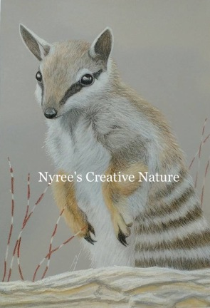 """""""Dave's Numbat"""": Pastel on A3 paper. (SOLD). Cards & limited edition Giclée Prints available."""