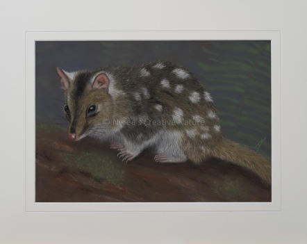 """Dot"" the Eastern Quoll: Pastel on A3 paper, Framed; 54cm x 44cm (SOLD). 1st Prize, Animal Portraiture, ""Drawings, Portraits and Miniatures"" Exhibition, QAS, 2017. Cards & limited edition Giclée Prints available."