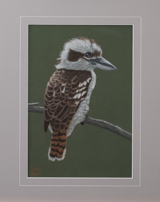 """""""Keith"""" the Kookaburra:Pastel on A3 paper. (SOLD). Cards & limited edition Giclée Prints available."""