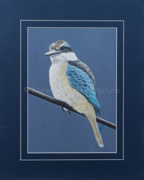 """Anique's Sacred Kingfisher"": Pastel on A3 Paper (SOLD). Cards & limited edition Giclée Prints available."
