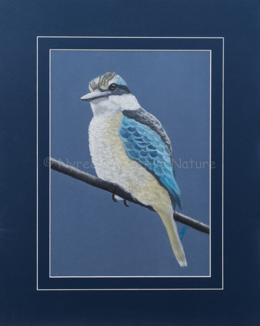 """""""Anique's Sacred Kingfisher"""":Pastel on A3 Paper (SOLD). Cards & limited edition Giclée Prints available."""