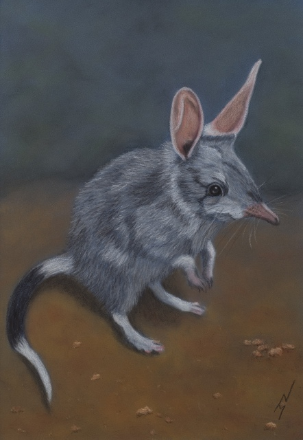 """Billy"" the Bilby: Pastel on A3 Paper; Framed; 43.5cm x 53.5cm ($490). 1st Prize, Pastels, ""Splash of Milk Art Award"", 2017. Cards & limited edition Giclée Prints available."