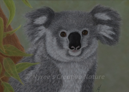 """Cass"" the Koala: Pastel on A3 Paper; Framed; 53cm x 43.5cm ($350). Cards & limited edition Giclée Prints available."