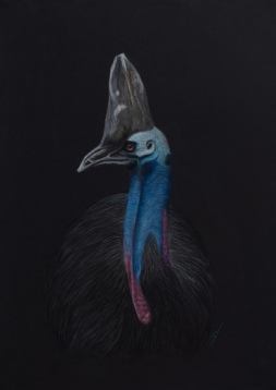 """Horatio"" the Cassowary: Pastel on A3 Paper; Framed; 43cm x 53cm ($490)."