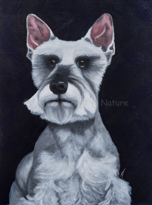 """""""Schweet Schnauzer"""": Acrylic on A3 canvas board. (SOLD)."""