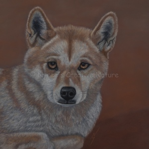 """Honey"" the Dingo. Pastel on A3 Paper. Framed; 45cm x 45cm ($390)."