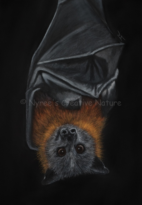 """""""Siegfried"""" the Grey-Headed Flying Fox. Pastel on A4 Paper; Framed, 43x53cm (NFS). Cards and Limited Edition Giclee Prints available in my Etsy Store."""