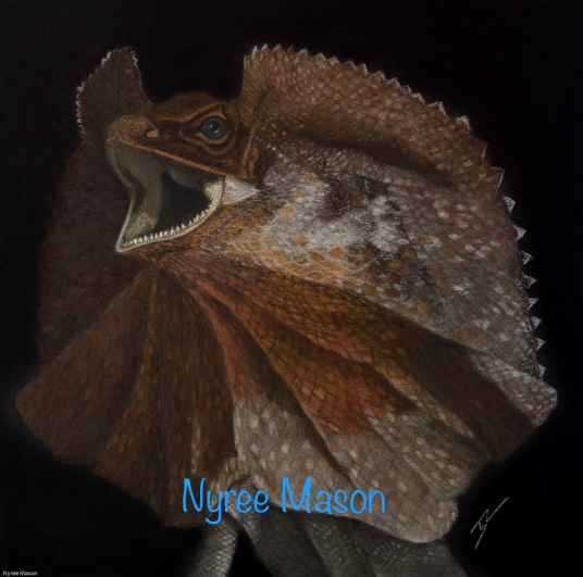 """""""Vince"""" the Frill-Necked Lizard. Pastel on A4 Paper; Framed; 45cm x 45cm ($350)."""
