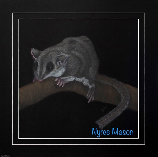 """""""Maxine"""" The Feather-Tailed Glider. Pastel on A4 Paper. (Donated to my Art Group's raffle)."""