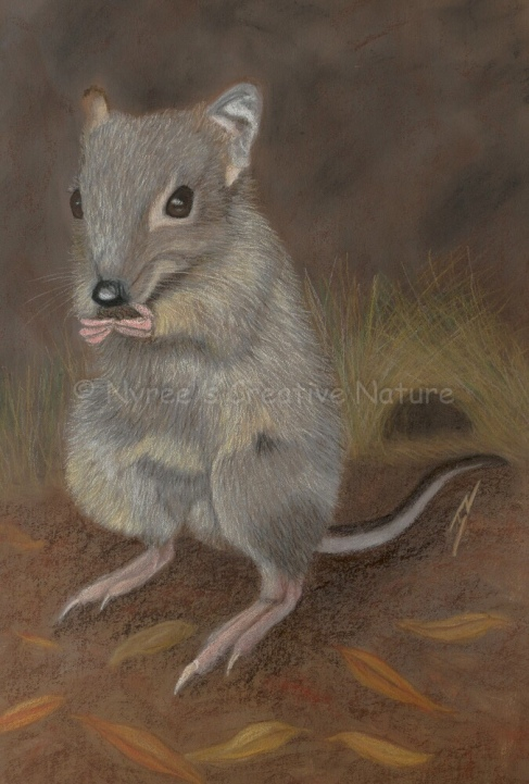 """""""Truffles"""" the Bettong: Pastel on A3 Paper; Framed ($450)."""