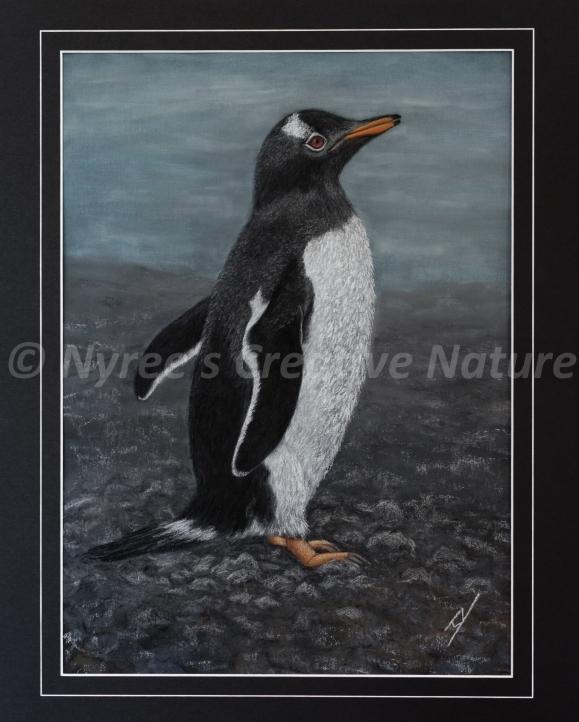 """""""BamBam"""" the Gentoo Penguin: Pastel on A3 Paper; Framed ($400)."""