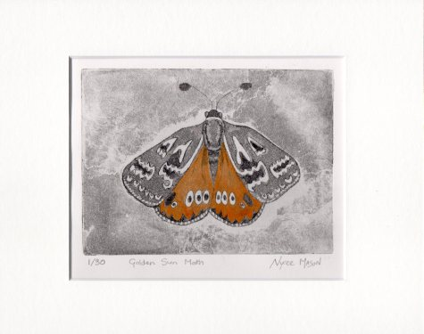 Golden Sun Moth Etching